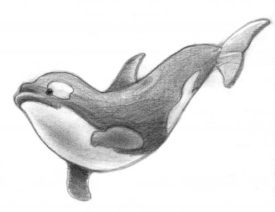 20140323180155-lapiz-orca2-pq.png
